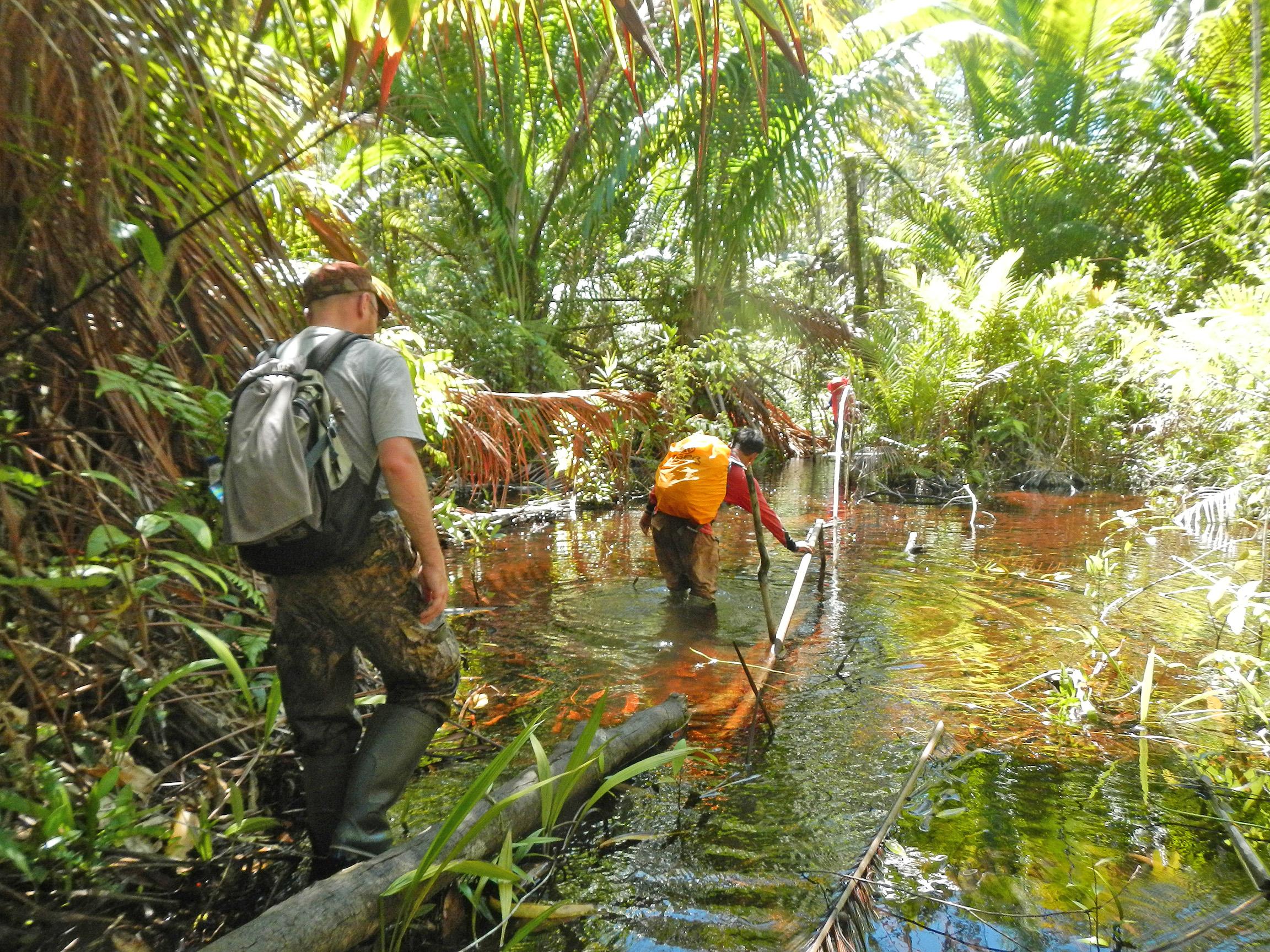 Каннибалы Папуа, в джунгли с палаткой